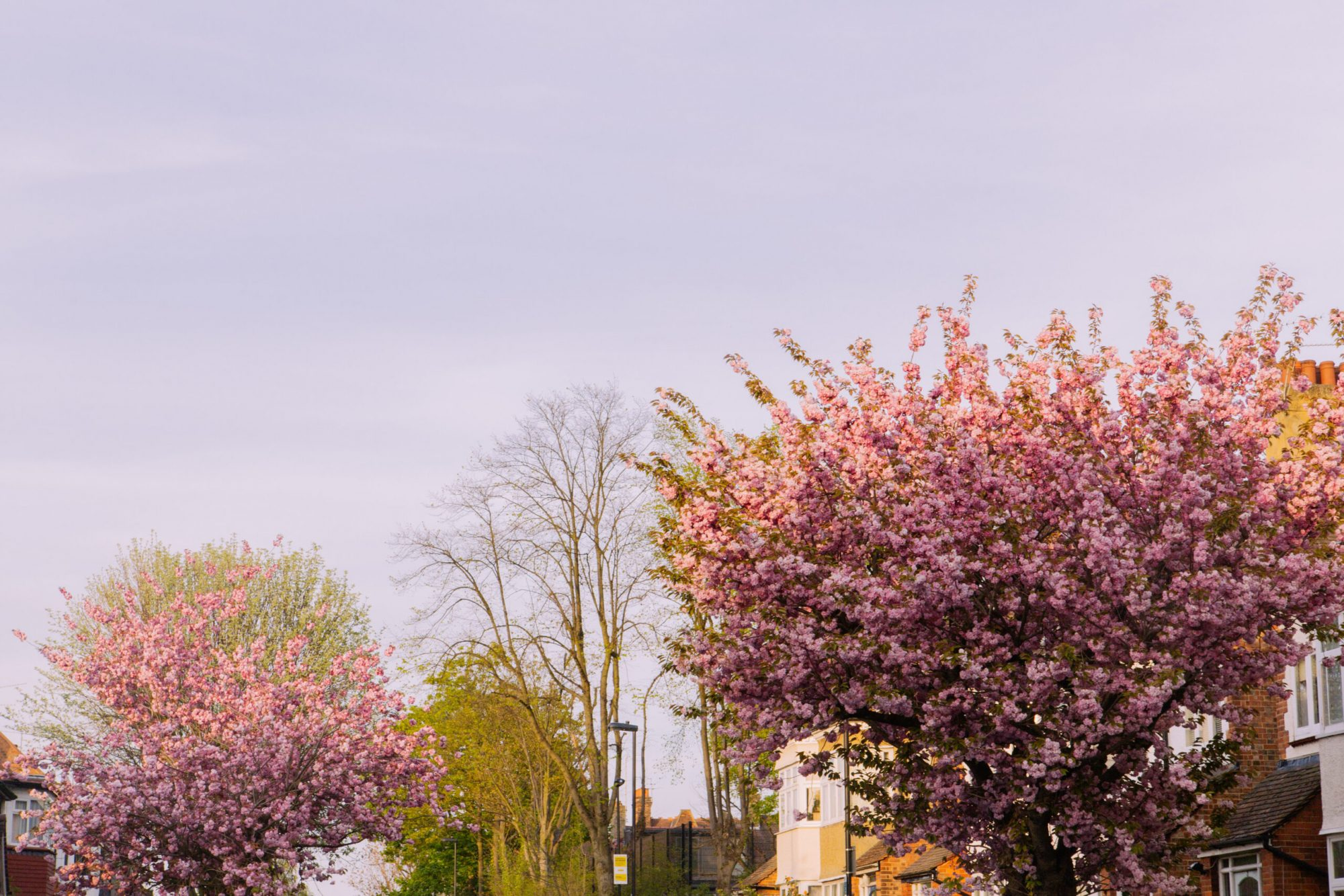 Trees on a street in North London, an area served by Davies & Davies, Estate Agents in Stroud Green.